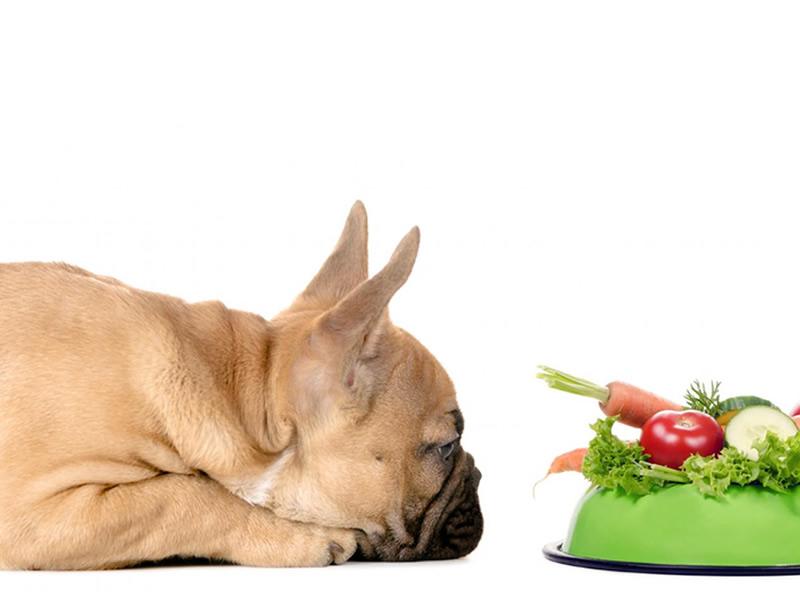 alimento-perros