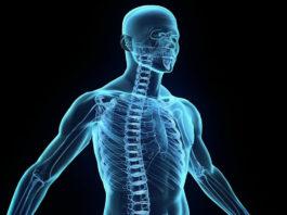 tipos-sistema-nervioso